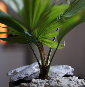 potted plants in the office promote healthy humidity levels with psychological benefits